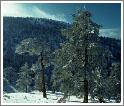 Снег выпадает только в горах
