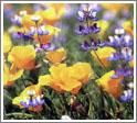 Весной земля острова покрывается ковром цветов