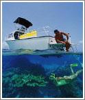 Подводное плавание на рифах доставит немало захватывающих минут