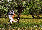 Заповедник птиц в Бхаратпуре