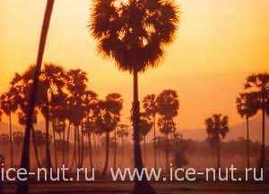 Тайланд. Отдых в Тайланде