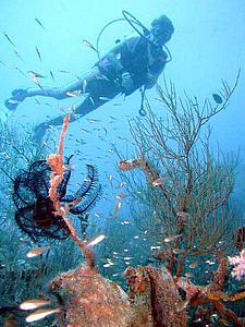 Дайвер на Мальдивах